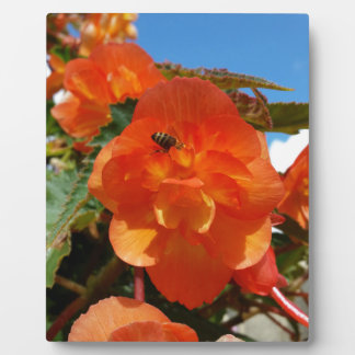 sky, flowers and bee plaque