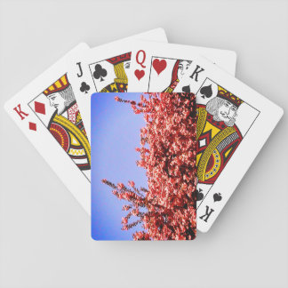 Sky From Below and Pink Leaves Playing Cards