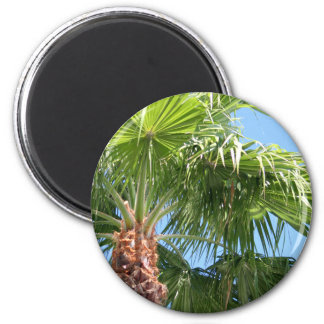 Sky Palm magnet