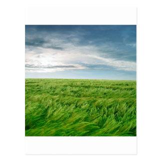 Sky Stormy Field Postcard