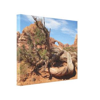 Skyline Arch, Utah Canvas Print