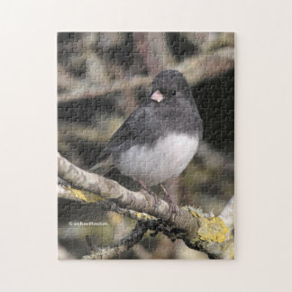 Slate-Colored Dark-Eyed Junco on the Pear Tree Jigsaw Puzzle