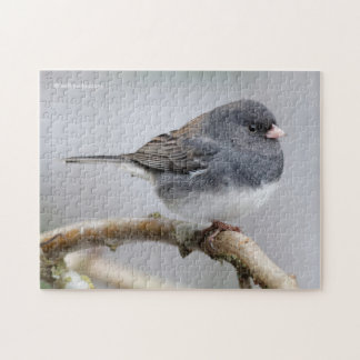 Slate-Colored Dark-Eyed Junco on the Pear Tree Puzzles