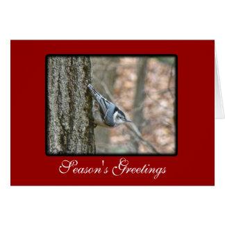 Slate Gray Nuthatch Christmas Songbird Christmas Card
