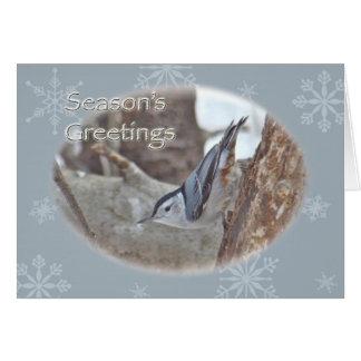 Slate Gray Nuthatch Songbird Seasons Greeting Card