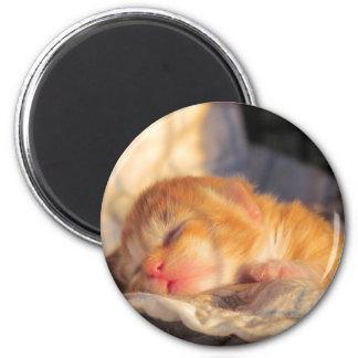 Sleep Tight Sweet Kitty Magnet
