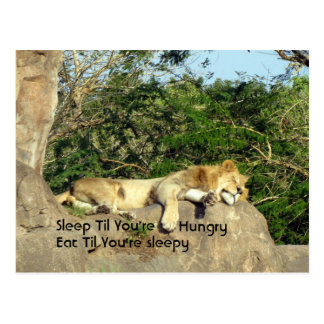 Sleep Til You're Hungry, Eat Til You're Sleepy Postcard