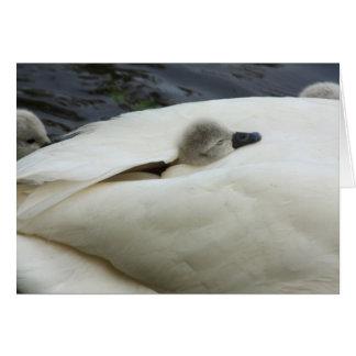 sleep well, little swan card