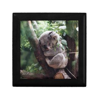 Sleeping Baby Koala Gift Box
