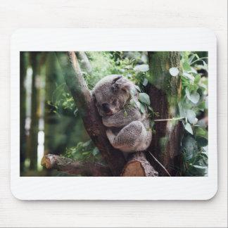 Sleeping Baby Koala Mouse Pad