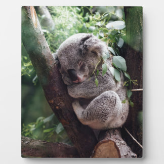 Sleeping Baby Koala Plaque