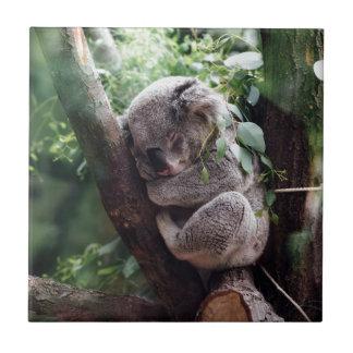 Sleeping Baby Koala Tile