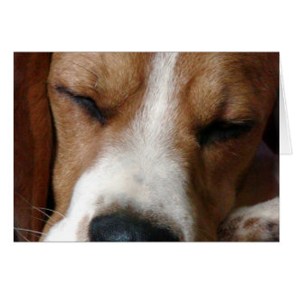 Sleeping Beagle Greeting Card