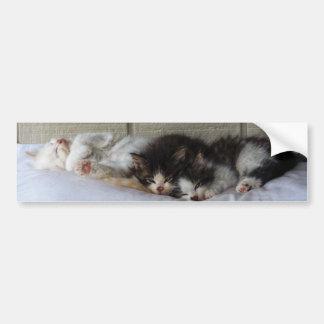Sleeping Beauties Bumper Sticker