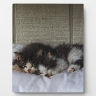 Sleeping Beauties Plaque