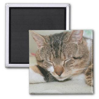 SLEEPING BROWN TABBY CAT MAGNET