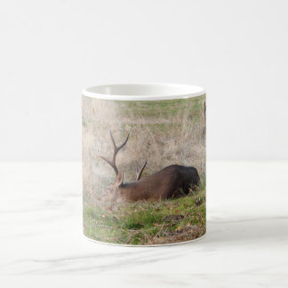 Sleeping Buck 11 oz Coffee Mug