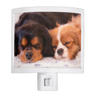 Sleeping Buddies Cavalier King Charles Night Light