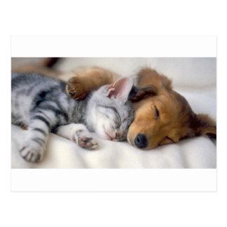 Sleeping Buddies Postcard