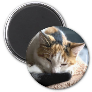 Sleeping Calico Cat Magnet