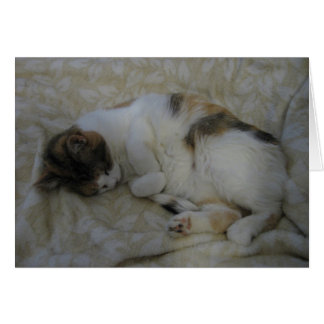 Sleeping Cat Blank Greeting Card