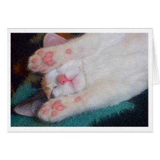 Sleeping Cat Card 1