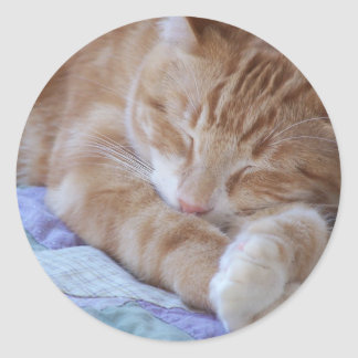 sleeping cat sticker