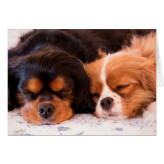 Sleeping Cavalier King Charles Spaniel Card