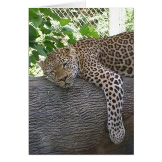 Sleeping Cheetah Card
