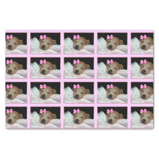 Sleeping Chihuahua dog tissue paper