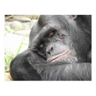 Sleeping Chimpanzee Postcard
