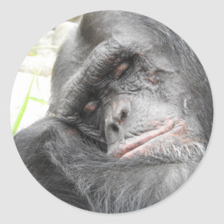 Sleeping Chimpanzee Sticker