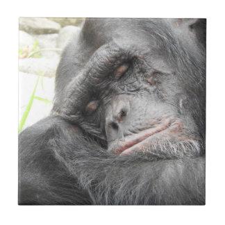 Sleeping Chimpanzee Tile