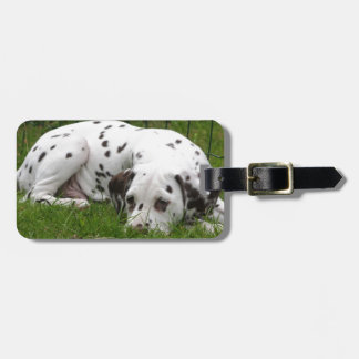 Sleeping Dalmation laying in field Luggage Tag