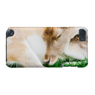 Sleeping Doe - Animal Photograph iPod Touch 5G Case