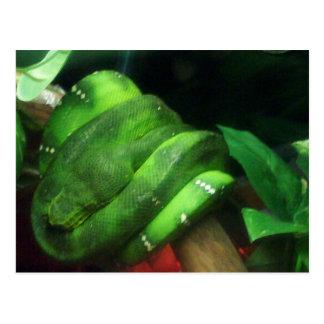 Sleeping Emerald Tree Boa Cards