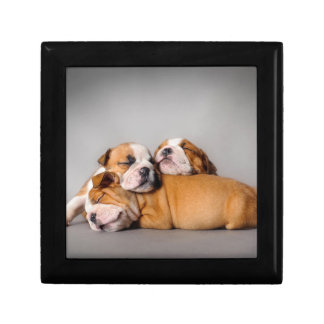 Sleeping English bulldog Gift Box