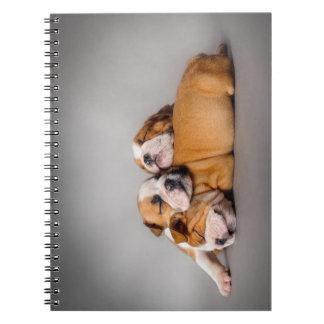 Sleeping English bulldog Notebooks