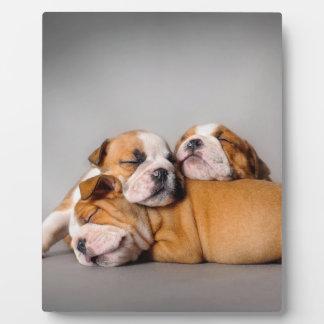 Sleeping English bulldog Plaque
