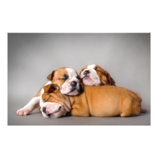 Sleeping English bulldog Stationery