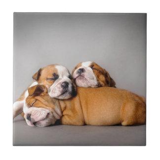 Sleeping English bulldog Tile