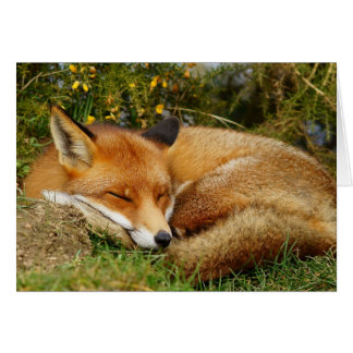 Sleeping fox get well card