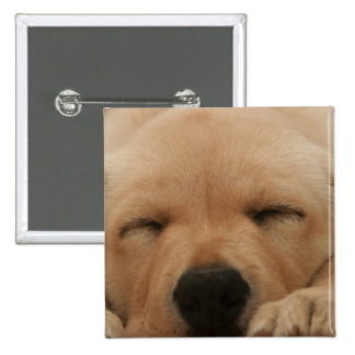 Sleeping Golden Retriever Square Pin