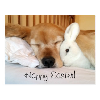 Sleeping Golden Retriever With White Bunny Easter Postcard