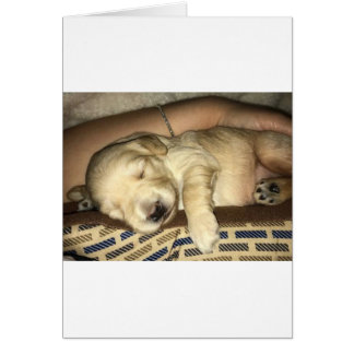 Sleeping GoldenDoodle Puppy Card