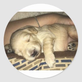 Sleeping GoldenDoodle Puppy Classic Round Sticker