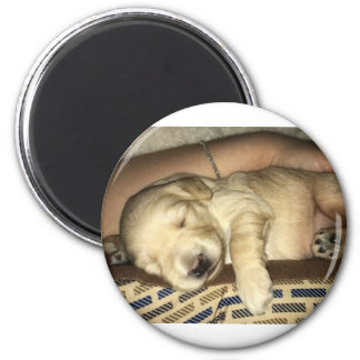 Sleeping GoldenDoodle Puppy Magnet