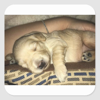 Sleeping GoldenDoodle Puppy Square Sticker