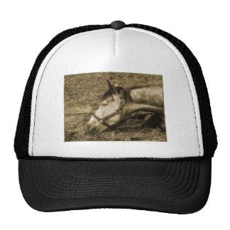 SLEEPING HORSE TRUCKER HAT