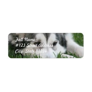 Sleeping Husky Dog Mailing Label Return Address Label